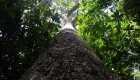 Brazil Nut Rainforest Community Project