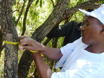Soddo Community Managed Reforestation